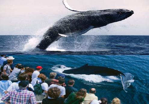 New York tourists enjoy the whales